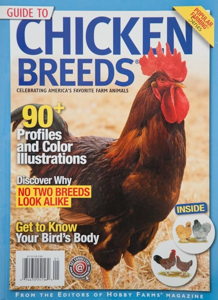 Popular Farming Chicken Breeds magazine, cover