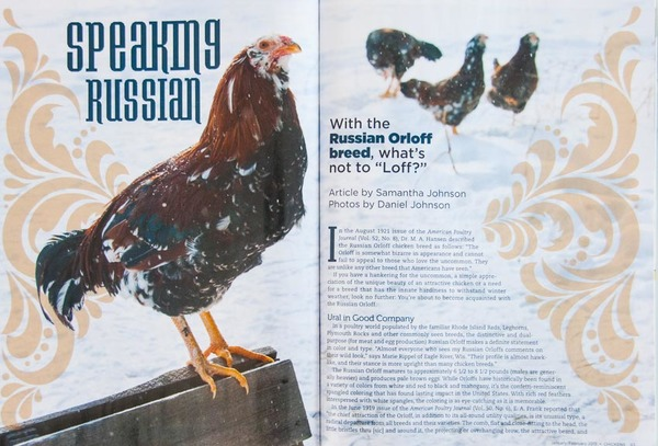 """Chickens"" magazine, interior photo spread"