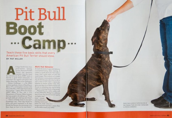 Popular Dogs, American Pit Bull magazine, interior images