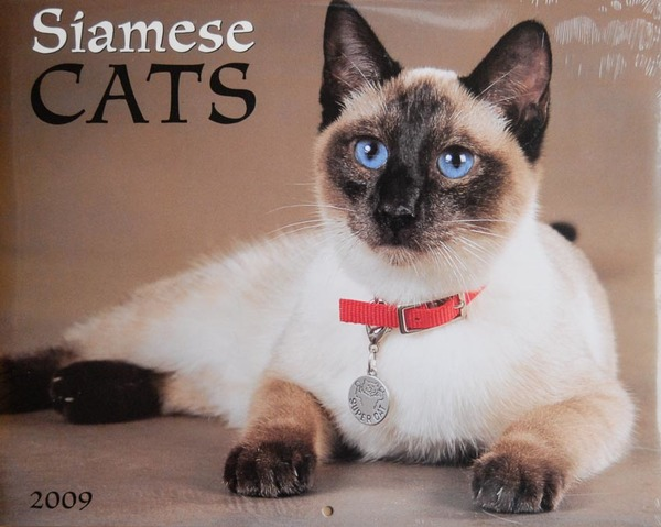 Siamese Cats calendar - Cover photo