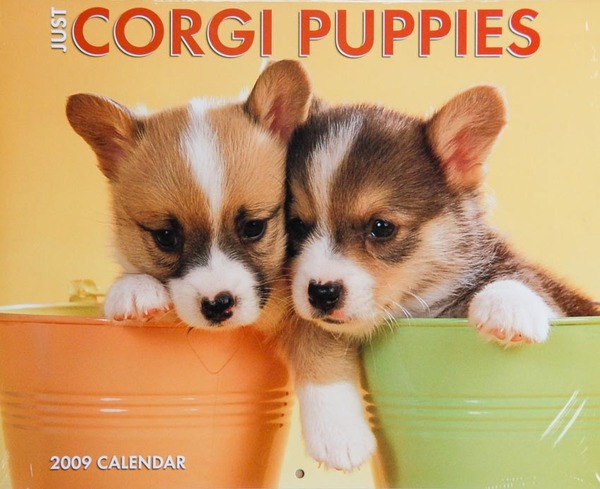 Corgi Puppies calendar - Cover photo