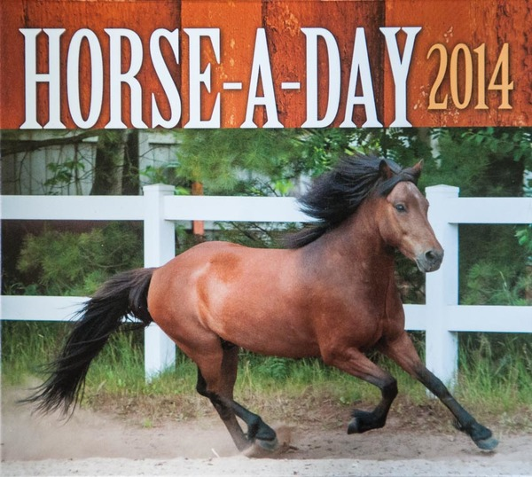 2014 Horse-A-Day Calendar, all photos