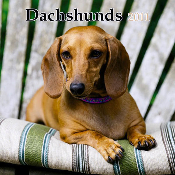 Cover, Dachshunds calendar