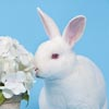 Mini Rex with flowers portrait