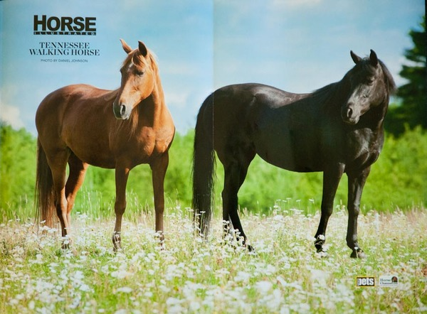 Horse Illustrated, 2011, Two-page poster image