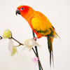Sun Conure sitting on branch with flowers